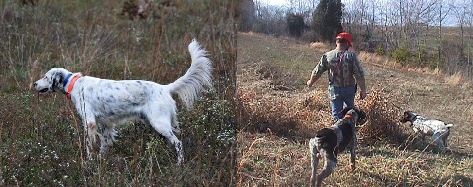 Western NC - Quail, Chukar, & Pheasant Hunting Guide Service